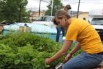 AmeriCorps Volunteer, Kelly, Weeding